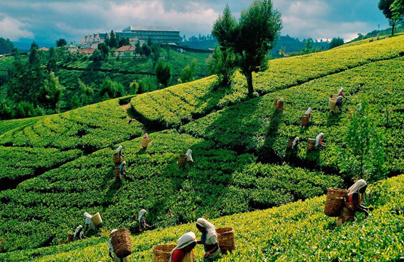 Sri Lanka Hill Country Tours