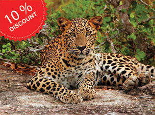 Wildlife Adventure Tours Sri Lanka