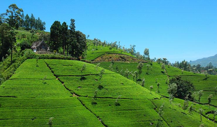 Sri Lankan Eco Tourism Sri Lankan Vacations And Tours
